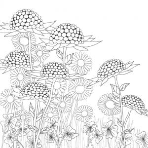 Wunderblumen Postkarten 4