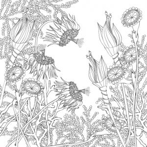 Wunderblumen Postkarte 5