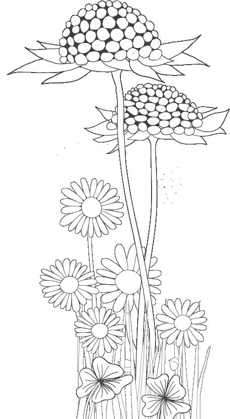 Wunderblume - Zeichnung von Angela Slama
